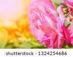 beautiful rose in a park on the ... | Shutterstock . vector #1324254686