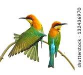 couple of bee eater bird on... | Shutterstock . vector #132436970