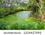 duck weed floating on the water ... | Shutterstock . vector #1324427093