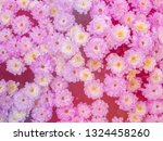 image of beautiful flowers on... | Shutterstock . vector #1324458260