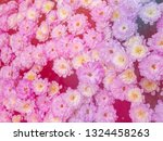image of beautiful flowers on... | Shutterstock . vector #1324458263