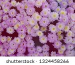 image of beautiful flowers on... | Shutterstock . vector #1324458266