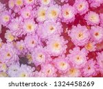 image of beautiful flowers on... | Shutterstock . vector #1324458269