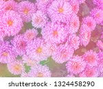 image of beautiful flowers on... | Shutterstock . vector #1324458290