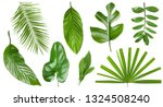set of different fresh tropical ... | Shutterstock . vector #1324508240