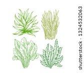 super greens illustration. aloe ... | Shutterstock .eps vector #1324532063