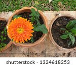 the beautiful orange gerbera... | Shutterstock . vector #1324618253