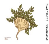 maca plant illustration....   Shutterstock .eps vector #1324621943