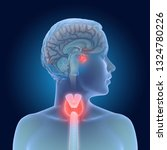 3d illustration of the thyroid... | Shutterstock . vector #1324780226