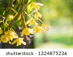 yellow orchid on green nature... | Shutterstock . vector #1324875236