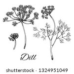 dill ink hand drawn set. branch ... | Shutterstock .eps vector #1324951049