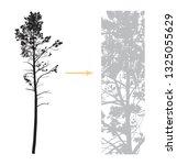 vector tall pine silhouette.... | Shutterstock .eps vector #1325055629