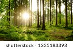 beautiful forest in spring with ... | Shutterstock . vector #1325183393