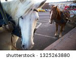 two cute harnessed horses... | Shutterstock . vector #1325263880