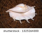 huge white sea shell with a... | Shutterstock . vector #1325264300
