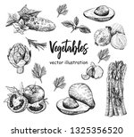 vector hand drawn food sketch... | Shutterstock .eps vector #1325356520