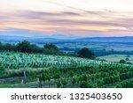 vineyad in autumn | Shutterstock . vector #1325403650