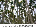 HAI DUONG, VIETNAM, February 28, 2018, the group of trees with the name (CAU) in the countryside of Hai Duong Vietnam,