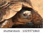 Stock photo portrait of stigmochelys pardalis previously geochelone pardalis leopard tortoise mountain 1325571863
