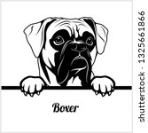 Stock vector boxer peeking dogs breed face head isolated on white vector stock 1325661866