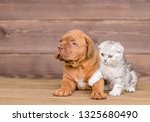 Stock photo puppy with kitten on wooden background empty space for text 1325680490