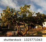 lemons on the tree | Shutterstock . vector #1325771063
