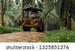 Worker Load Fresh Palm Oil...