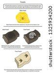 fossils infographic diagram...   Shutterstock .eps vector #1325934200