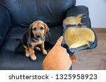person scolding the dog for... | Shutterstock . vector #1325958923