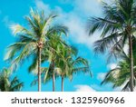 tropical summer nature scene ... | Shutterstock . vector #1325960966