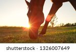 close up  lens flare  adorable...   Shutterstock . vector #1326007649