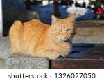 bored lazy grumpy yellow cat... | Shutterstock . vector #1326027050