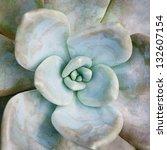 Succulent   Green Cactus Flower