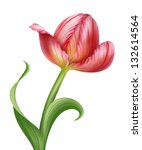 isolated pink parrot tulip... | Shutterstock . vector #132614564