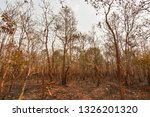 forest fires  burning deciduous ... | Shutterstock . vector #1326201320