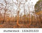 forest fires  burning deciduous ... | Shutterstock . vector #1326201323