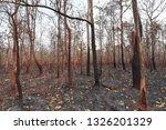 forest fires  burning deciduous ... | Shutterstock . vector #1326201329