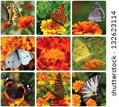 collage with butterflies... | Shutterstock . vector #132623114