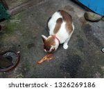 Cat Wants To Eat Shrimp From...