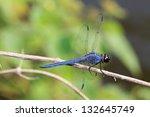 a dark blue  purple dragonfly... | Shutterstock . vector #132645749
