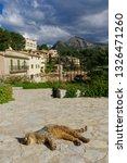 A Cat Sleeping On A Terrace In...