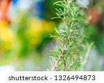 fresh rosemary herb grow... | Shutterstock . vector #1326494873