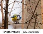 horizontal photo of blue tit... | Shutterstock . vector #1326501809