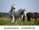 two white horses walking at the ... | Shutterstock . vector #132658700