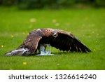 bird at work. golden eagle ... | Shutterstock . vector #1326614240