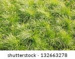 Spring juicy grass illuminated by sunlight, background - stock photo
