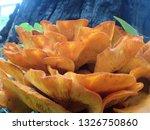 Cluster Of Orange Jack O...