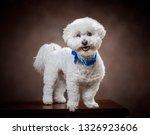 horizontal shot of a white... | Shutterstock . vector #1326923606