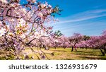 close up of almond trees pink... | Shutterstock . vector #1326931679