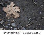 solitary leaf on very muddy... | Shutterstock . vector #1326978350